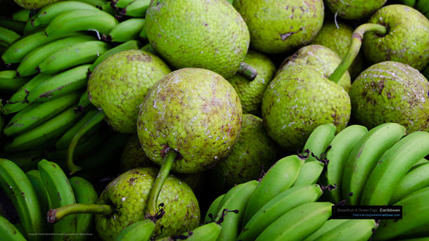 Breadfruit & Green Figs Caribbean Wallpaper by Patrick Bennett