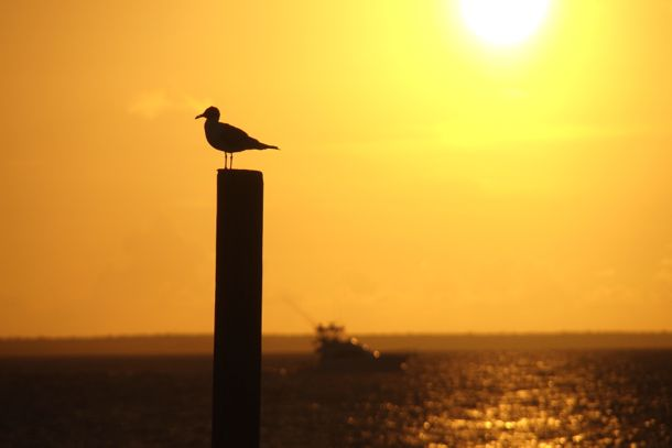 Bird, Boat, Sunset