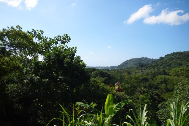High in the Roxborough Hills, Tobago/SBPR
