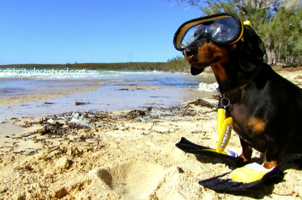 Crusoe all geared up for a snorkel