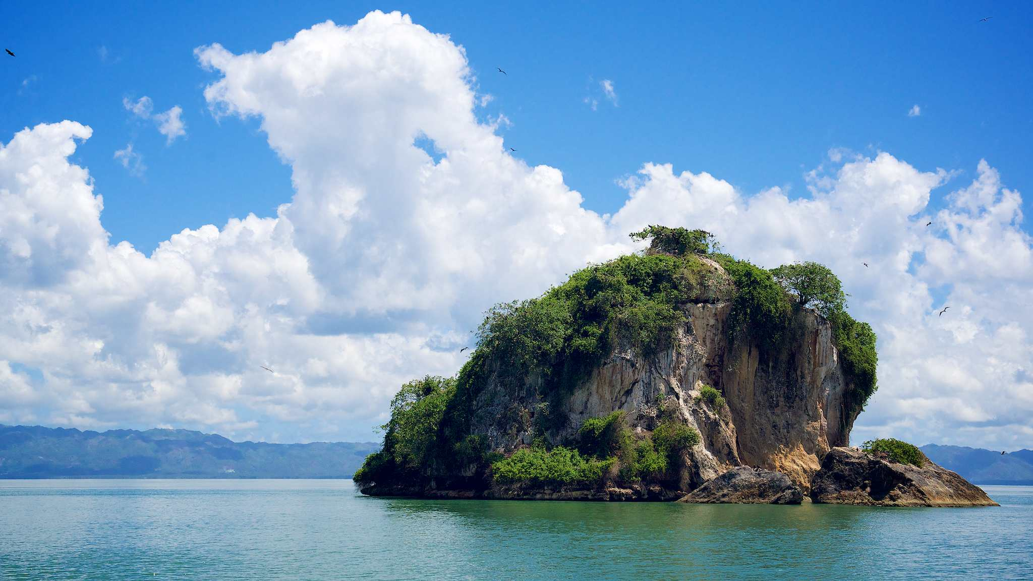 Los Haitises National Park island with birds by Patrick Bennett