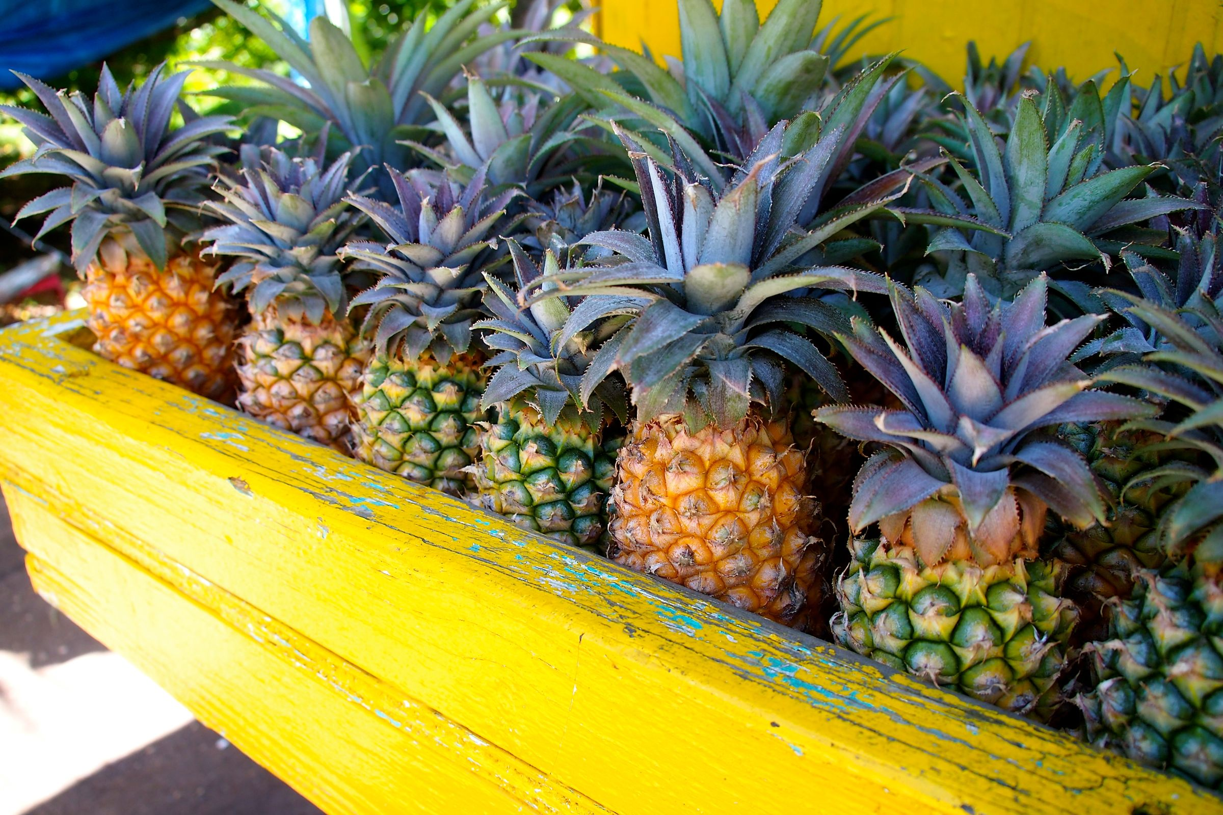 Antigua Black Pineapples