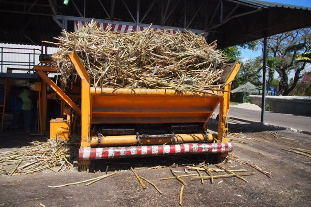 Fresh cut cane waiting to be crushed at Rhum Barbancourt | SBPR