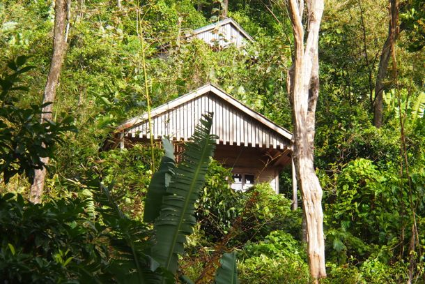 Jungle Bay Cottages set seamlessly in nature | SBPR