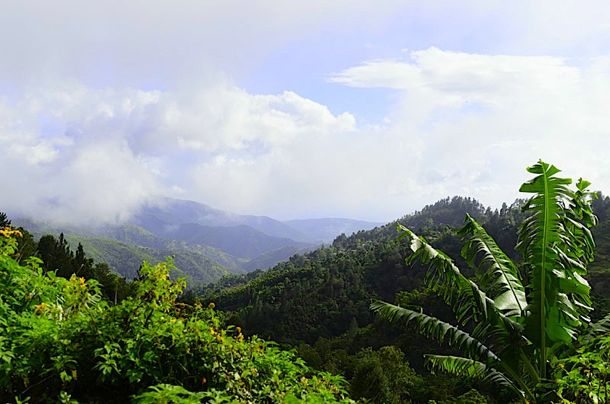 High up in Jamaica's Magical Blue Mountains | Credit: Zickie Allgrove