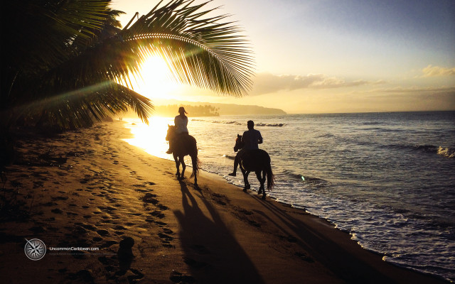 Horseback, Las Terrenas, Dominican Republic