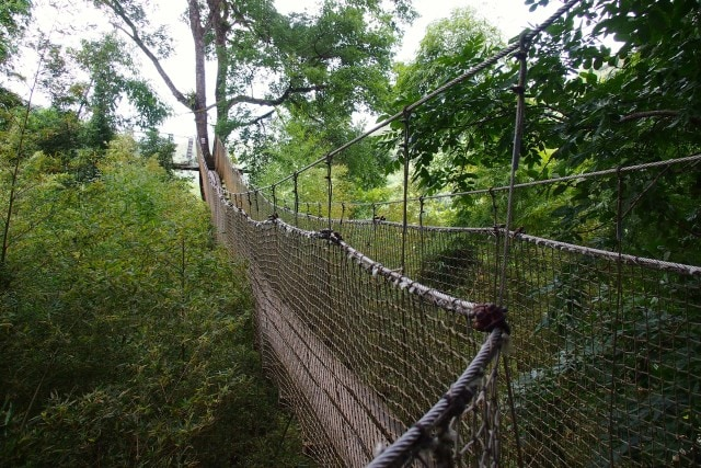 On to another tree on the Treetop Trail, Balata Gardens, Martinique | SBPR