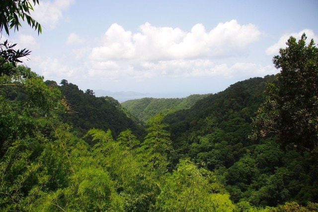 Treetop Trail View to Bay of Fort-de-France | SBPR