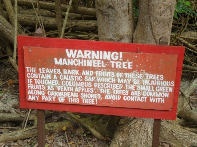 Manchineel warning sign in St. John, U.S. Virgin Islands | Credit: Flickr user arctic_whirlwind