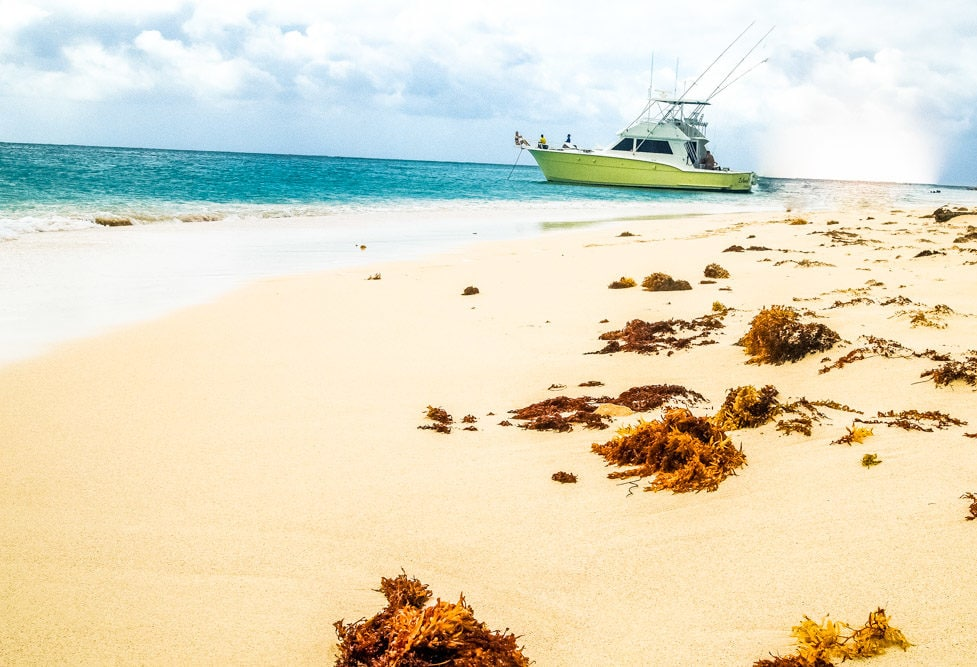 Happily Beached at Buck Island, St. Croix