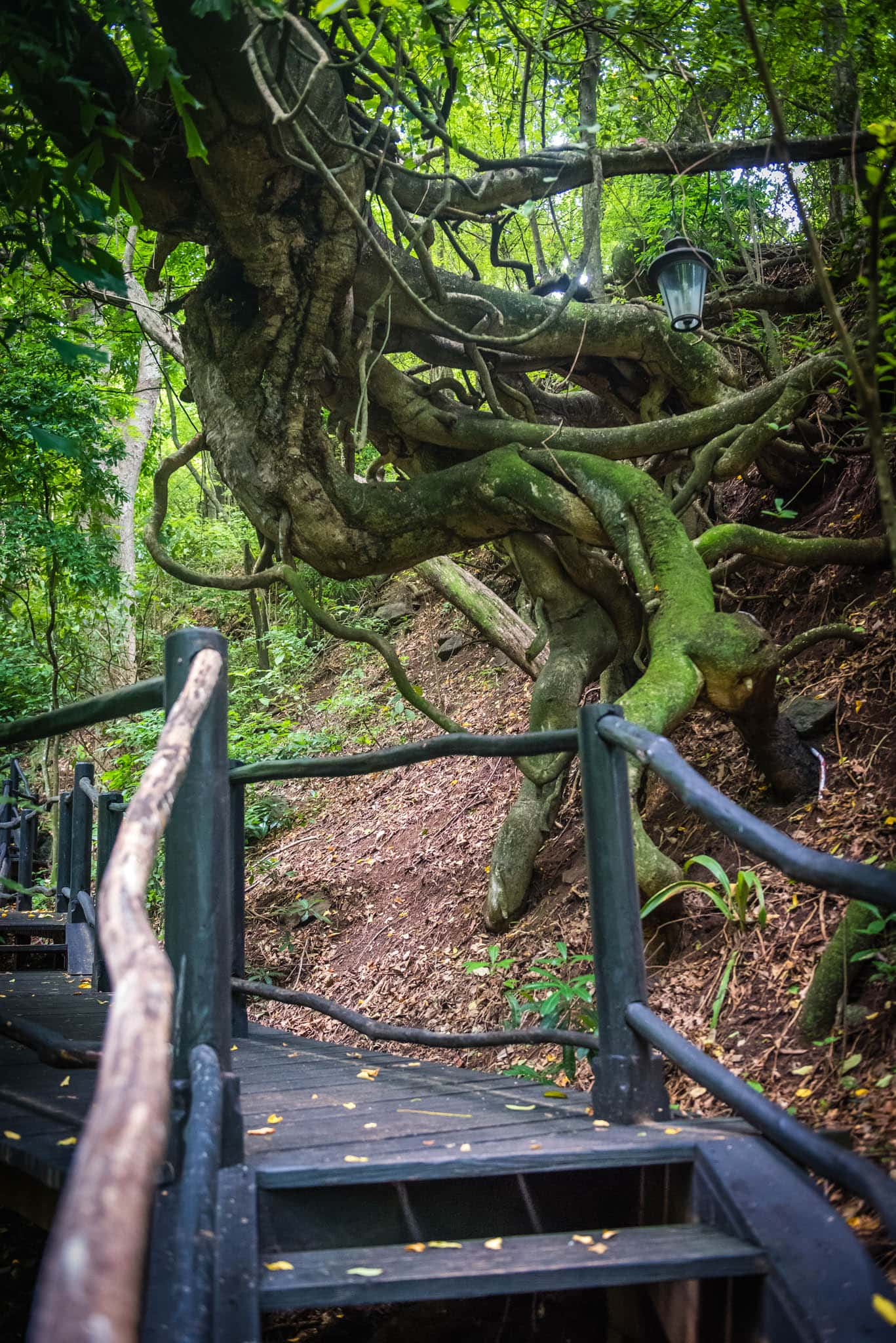 Nature abounds on the rainforest walk through some of the properties lush surroundings.