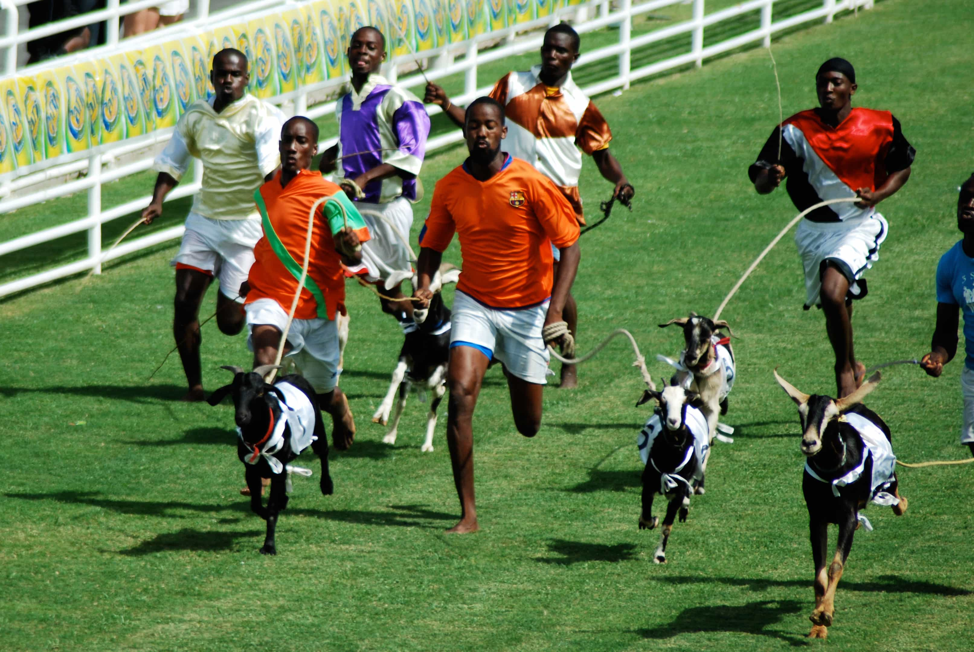 Easter Tuesday goat races, Buccoo | Credit: Flickr user Kate Nevens