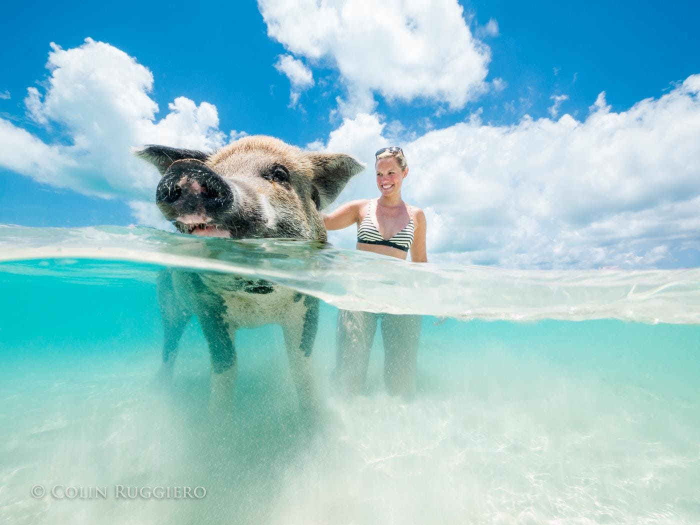 Pig Beach swim in Exuma | Credit: Colin Ruggiero
