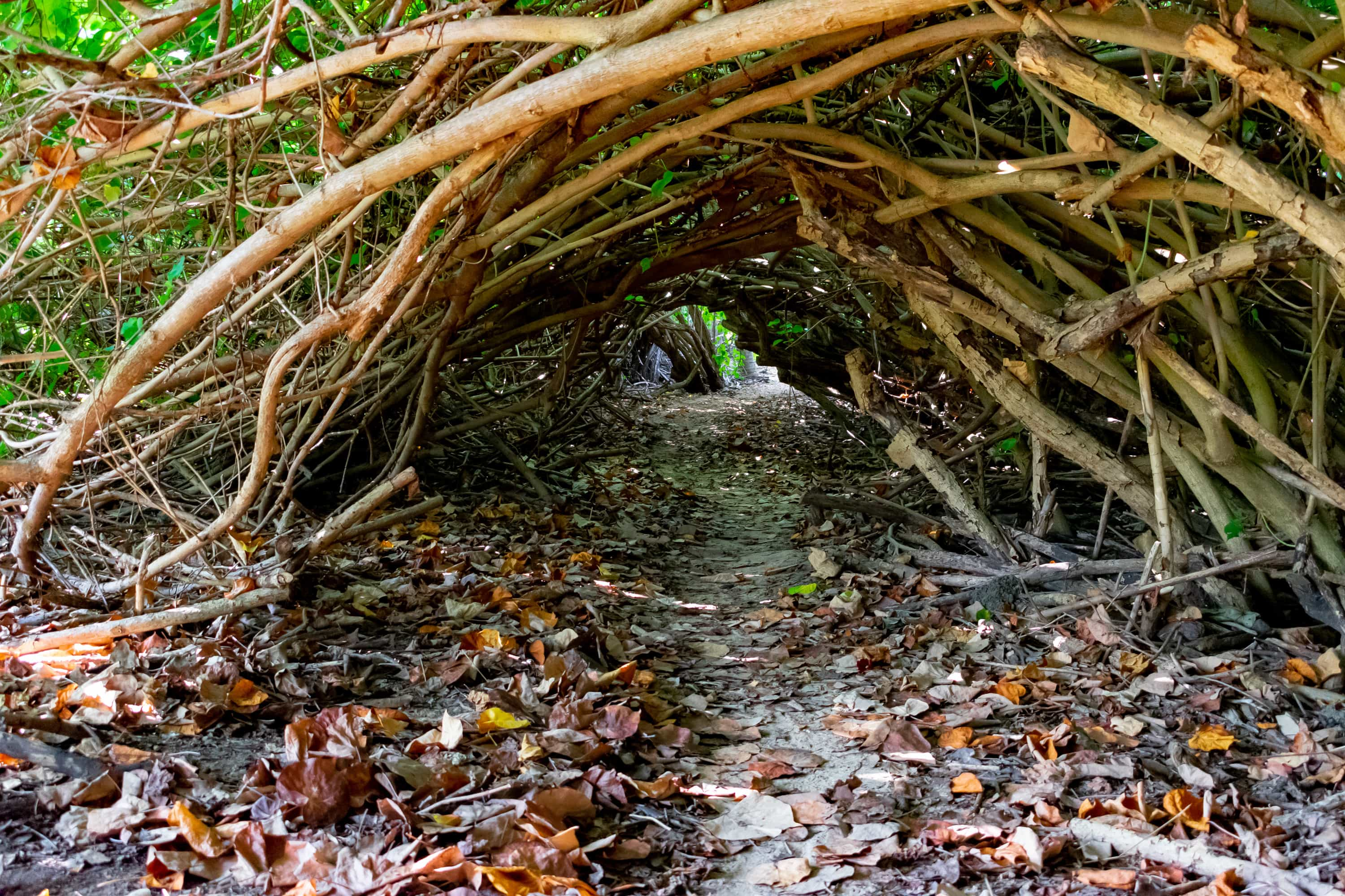 Shoys Beach Tunnel Of Love, St. Croix | SBPR
